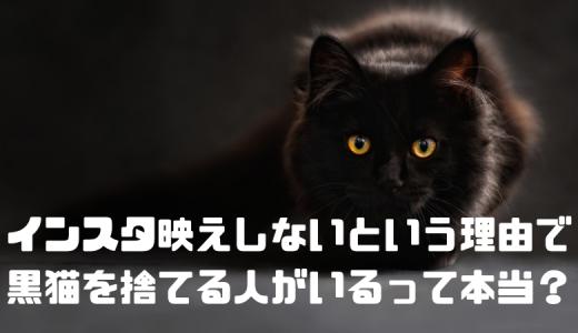 【初耳学】インスタ映えしないという理由で黒猫を捨てる人がいるって本当?フェイクニュース?日本の話?